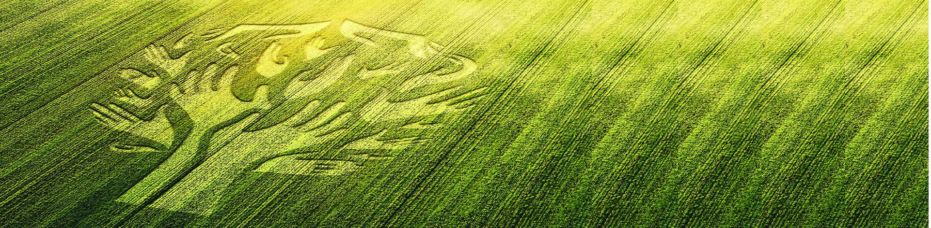 https://www.agriculture.gov.ma/sites/default/files/revslider/image/Accueil%20Cadre%20juridique%20%281%29.png